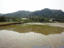 新竹關西農地土地休閒地建地農舍
